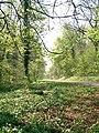 Forest Fawr, nr Tongwynlais - geograph.org.uk - 410449.jpg