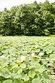 Forest Park, Springfield, MA 01108, USA - panoramio (50).jpg