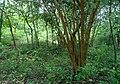 Forest at Kambalakonda in Visakhapatnam 03.jpg