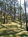 Forest between kasauli and nainital.jpg