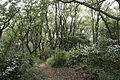Forest in Mt.Hokyo 03.jpg