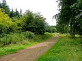 Forest of Dean cycle track - geograph.org.uk - 1431828.jpg