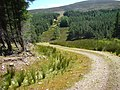 Forestry Road - geograph.org.uk - 1168044.jpg