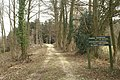 Forestry Track - geograph.org.uk - 139607.jpg