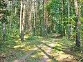 Forst Grunewald - Waldweg (Woodland Path) - geo.hlipp.de - 41350.jpg