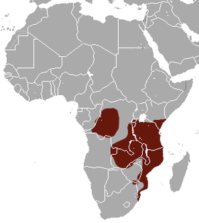 Four-toed Elephant Shrew area.png