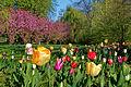 Frühling im Bad Mergentheimer Kurpark. 05.jpg