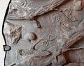 Frammenti di fusto di lesena con tralci di vite, dal tempio di venere genitrice nel foro di cesare, marmo proconnesio, 113 dc, 02 chiocciola.JPG