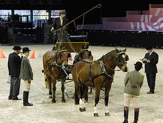 Freiberger - Freiberger horses in harness competition