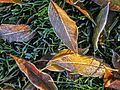 FrostLeavesGrass PC270020 w.jpg