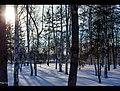 Frost (61628463).jpeg