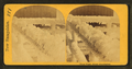 Frost work, Mount Washington, from Robert N. Dennis collection of stereoscopic views.png