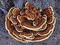 Fungi in Otava.jpg