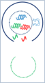 Génique adn 3.png