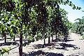 GDC Kalifornien 1.jpg