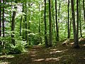 Gammarth Forest 1.jpg