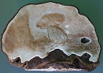 Ganoderma applanatum - A drawing on the lower side of Ganoderma applanatum