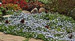 Garden colours IMG 0232 (14442152864).jpg
