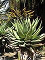 Gardenology-IMG 5394 hunt10mar.jpg