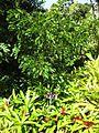 Gardenology.org-IMG 0504 rbgs10dec.jpg