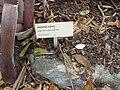 Gardenology.org-IMG 2189 rbgs11jan.jpg