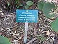 Gardenology.org-IMG 2513 ucla09.jpg