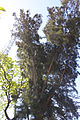 Gardens of the San Anton Palace-8.jpg