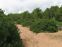 Garraf Naturpark 1.jpg