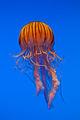 Georgia Aquarium (4663503456).jpg