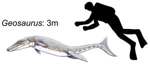 Geosaurus - Size of G. giganteus
