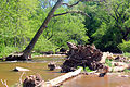 Gfp-canada-ontario-bronte-creek-state-park-fallen-tree-in-stream.jpg