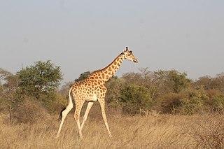 East Sudanian savanna