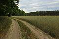 Glietzer Wald 01.JPG