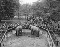 Goedkope dag in Artis, olifanten, Bestanddeelnr 909-5655.jpg