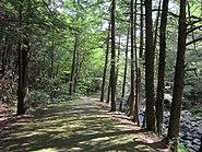 Granville State Forest,Granville MA