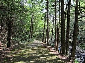 Granville State Forest,Granville MA.jpg