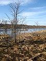 Great Marsh from the Overlook - panoramio.jpg