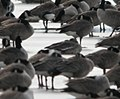Greater White-fronted Goose, Muskegon Wastewater Complex, January 7, 2012 (6656070661).jpg
