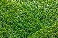 Green Foliage Texture - HDR (7688549024).jpg
