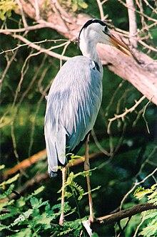 Punnayurkulam Wikipedia