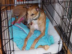 Greyhound in dog crate.jpg
