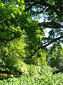 Großer Garten50.jpg