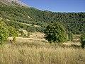 Grove Creek Trail in September - panoramio - photophat (11).jpg