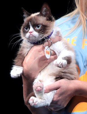 Cats and the Internet - Grumpy Cat, a pet made famous through an image macro, on stage at VidCon 2014