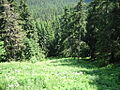 HIgh Tatras Forest.JPG