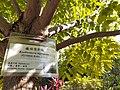 HK 香港公園 Hong Kong Park 植物 樹木 plant yu tree green leaves December 2020 SS2 01.jpg