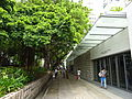 HK TST Nathan Road green Sidewalk Chinese Banyan trees Aug-2015 DSC (4).JPG