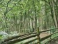 Hartshill Hayes trees 3.jpg
