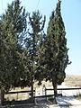 Hartuv cemetery P1030554.JPG