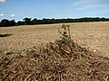 Harvested field near Boundary Farm - geograph.org.uk - 538513.jpg
